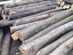 精品 香杉 广泛用于建筑 桥梁  家具 质量好 价格优
