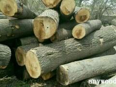 泡桐原木,木材