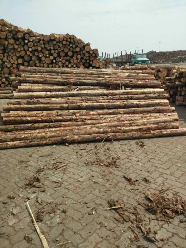 厂家直销新西兰辐射松  花旗 樟子松 加勒比松 俄罗斯樟子松原木