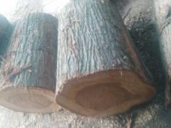可定制 池杉(落叶松) 水杉木制品 各种木制品均可定做