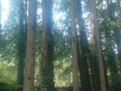专业生产 池杉(落叶松) 水杉木制品 各种木制品均可定做