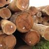 南美旋切材直供厂家首选东莞柏能木业
