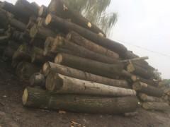 陕西鲁鑫木业可定制加工生产批发桐木板材,杂木原木等