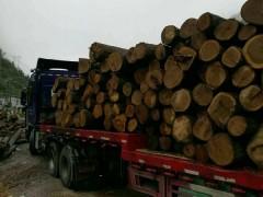 贵州金龙木业 专营贵州楸木原木 红椿原木 香柏木原木
