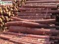 中国和俄罗斯原木检验标准的异同