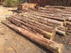 精品杉木原木批发