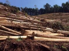 各种规格杉木原木批发