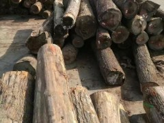 美国CK森林木业主营俄亥俄州黑胡桃原木批发