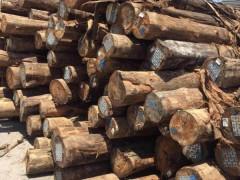 浙江宏祥旋切木皮加工厂长期供应桉木单板