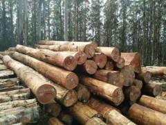 山东澳大利亚桉木原木最新报价,青岛星特科木业大量批发