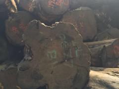 第伦桃原木,进口第伦桃原木长期大量供应,货源稳定