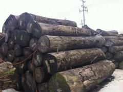 美国红橡原木 白橡原木长期大量供应