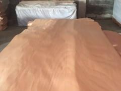 长期大量生产各种规格桃花心木皮