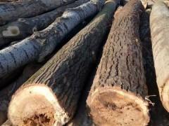 厂家直销各种规格杨木原木长期供应