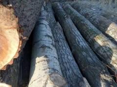 精品杨木原木,杨木方条,杨木板材长期大量供应