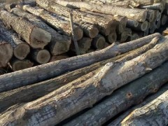 各种规格杨木木方,杨木方条,杨木原木寻求买家。