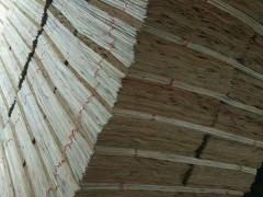 东岳木业厂家批发桉木单板