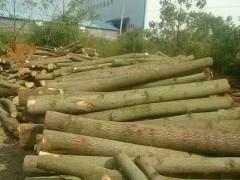 湖南梧桐原木供应商有哪些衡阳金秋木业专业供应各种规格梧桐原木