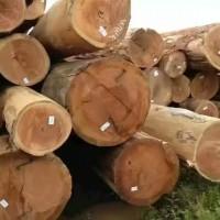 张家港克丽斯玎木材有限公司【巴西桉木