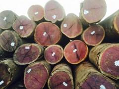 张家港保税区紫心木供应商,紫心木原木报价克丽斯玎紫心木报价