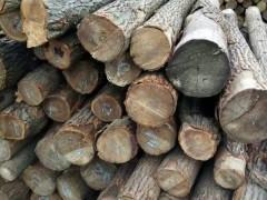 大量黄心柏原木找买家,各种规格黄心柏原木批发