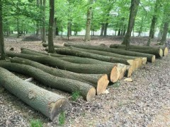 张家港克丽斯玎木材源头直供欧洲白橡原木,各种规格均有货