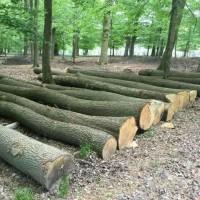 张家港克丽斯玎木材源头直供欧洲白橡原