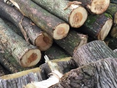 长期大量供应柏木,大量柏木找买家