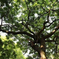 格木植物文化
