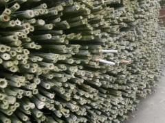 湖北菜架竹行大量供应菜架竹,长期有货