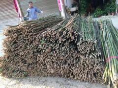 随州菜架竹大量批发,价格美丽