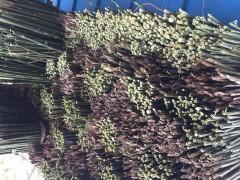各种菜架竹大量有货,均可定制加工