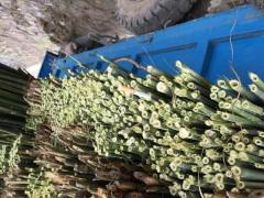 厂家直销各种规格菜架竹均可定制加工菜架竹批发
