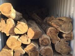 广东墨西哥黄金檀供应商江门墨西哥黄金檀供应商红发木业常年供应