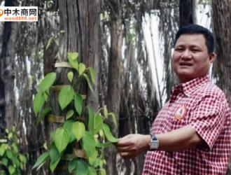 木材生意不好做?柬埔寨