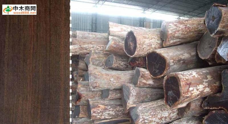 生长习性   产于热带雨林地区,生长期非常缓慢,木料极其珍贵,材质细腻,密度大,棕眼小而稀少,硬度最大。   树木分布编辑本属约500种,广泛分布于世界热带及温带地区。常从非洲的马达加斯加小批量进口,不带树皮和边材。分布于世界热带地区。该种常从非洲的坦桑尼亚和莫桑比克进口,   不同名称   中文名称:黑檀,别名:乌木、黑紫檀;拉丁文名:Dalbergia melanaoxylon Guill&perr.