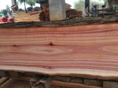 湖南红椿木红椿木板材可定制加工生产首选湖南森达木材加工厂