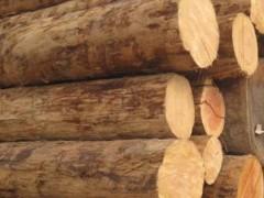 江西本地松木原木各种规格大量批发首选辉煌精品松木有限公司