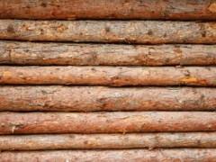 本地松木国产松木原木江西松木原木厂家认准辉煌精品松木