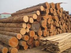 辉煌精品松木专业从事国产松木批发本地松木批发货源稳定