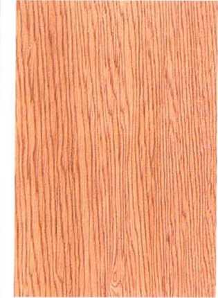 木材微观三切面图片