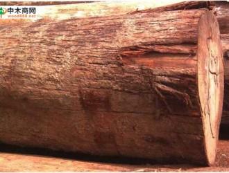 南洋地区进口木材名称:裂冠木 Schizomeria spp.