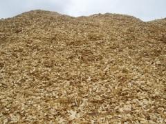 北美进口制浆用针叶木片