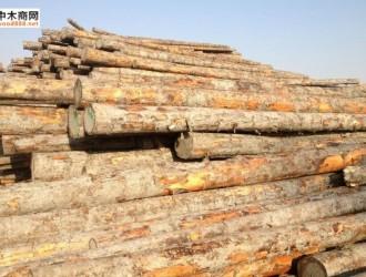 湖州口岸首次进口日本黑松原木