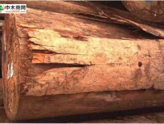 南洋地区进口木材名称:龙脑香 Dipterocarpusspp.