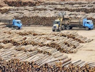 太仓港、绥芬河、满洲里等口岸俄罗斯原木库存量不断增加