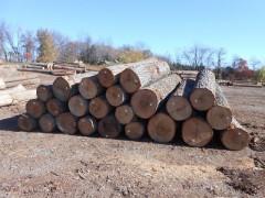 精品红橡原木美国滨州原木首选美国CK森林木业有限公司