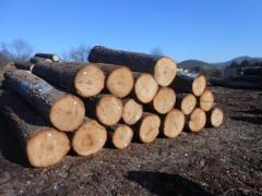 北美山核桃原木现货刚到厂长度7尺以上直径12寸以上