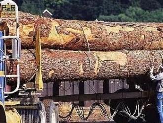 芬兰木材采伐量同比增幅近7%