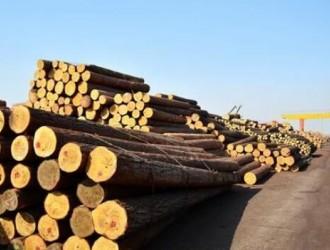 2017中国木材市场走向预测